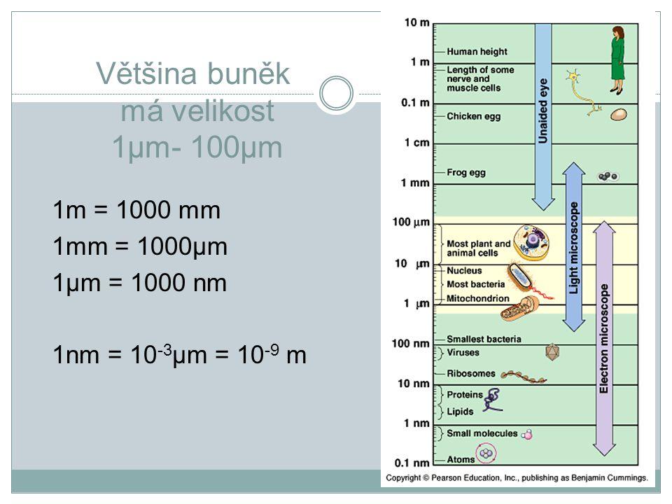 Většina buněk má velikost 1μm- 100μm 1m = 1000 mm 1mm = 1000μm 1μm = 1000 nm 1nm = 10 -3 μm = 10 -9 m