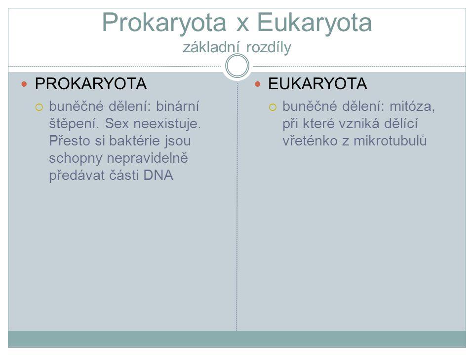 Prokaryota x Eukaryota základní rozdíly PROKARYOTA  buněčné dělení: binární štěpení. Sex neexistuje. Přesto si baktérie jsou schopny nepravidelně pře