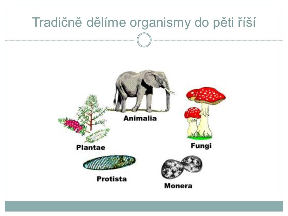 Nemoci způsobované baktériemi NEMOCPATOGEN VEKTOR/ REZERVOÁR EPIDEMIOLOGIE Anthrax Bacillus anthracis živočichové přímý kontakt nebo požití.