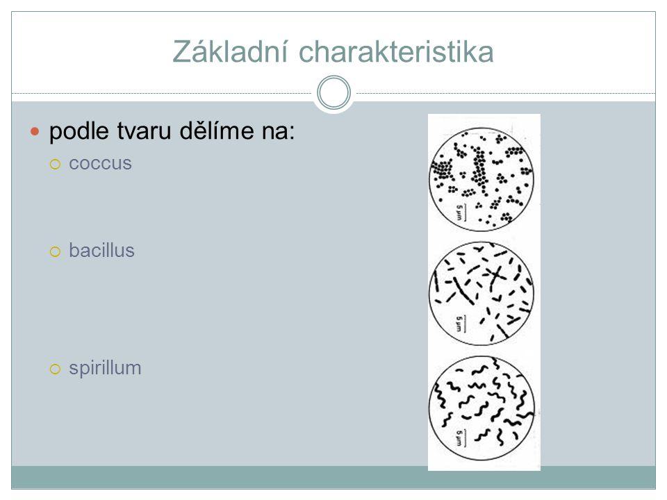 Základní charakteristika podle tvaru dělíme na:  coccus  bacillus  spirillum
