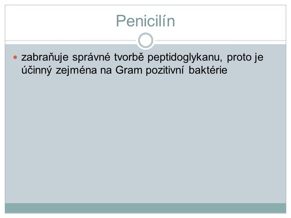 Penicilín zabraňuje správné tvorbě peptidoglykanu, proto je účinný zejména na Gram pozitivní baktérie