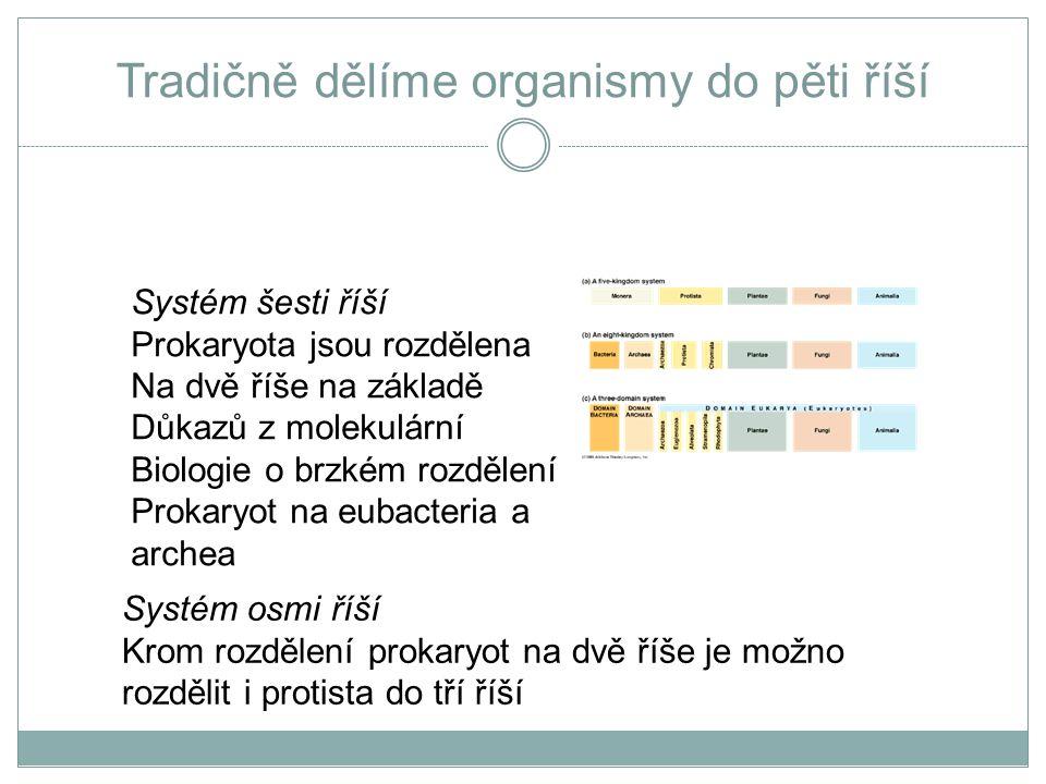 Prokaryota x Eukaryota základní rozdíly PROKARYOTA  buněčné dělení: binární štěpení.