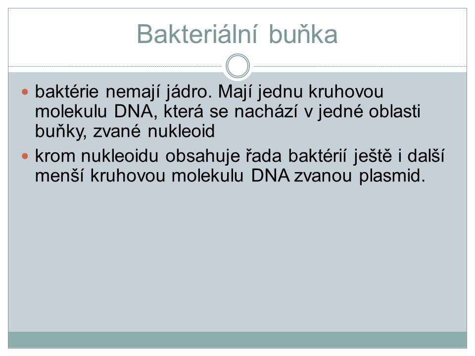 Bakteriální buňka baktérie nemají jádro. Mají jednu kruhovou molekulu DNA, která se nachází v jedné oblasti buňky, zvané nukleoid krom nukleoidu obsah
