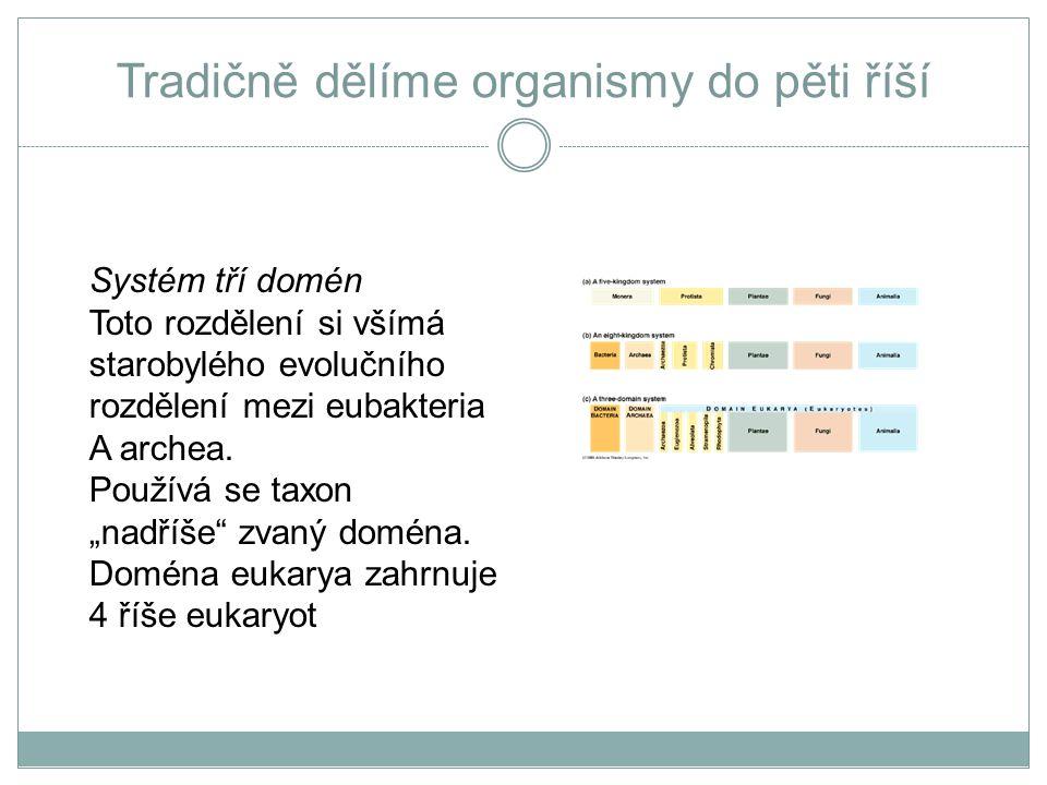 Prokaryota x Eukaryota základní rozdíly PROKARYOTA  kompartmentalizace: z organel existují jen ribosómy, jinak organely zcela chybí.