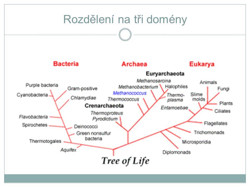 Prokaryota x Eukaryota základní rozdíly PROKARYOTA  metabolismus: pokud fotosyntetizují, pak existují různé typy fotosyntézy, je uvolňován kyslík nebo síra nebo sulfát.