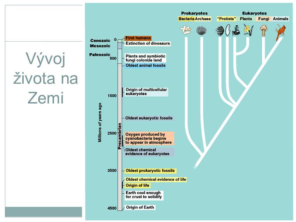 Baktérie a prostředí když organismus zemře, jiné baktérie (tzv.