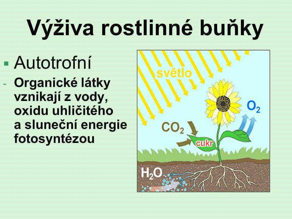 Výživa rostlinné buňky  Autotrofní - Organické látky vznikají z vody, oxidu uhličitého a sluneční energie fotosyntézou