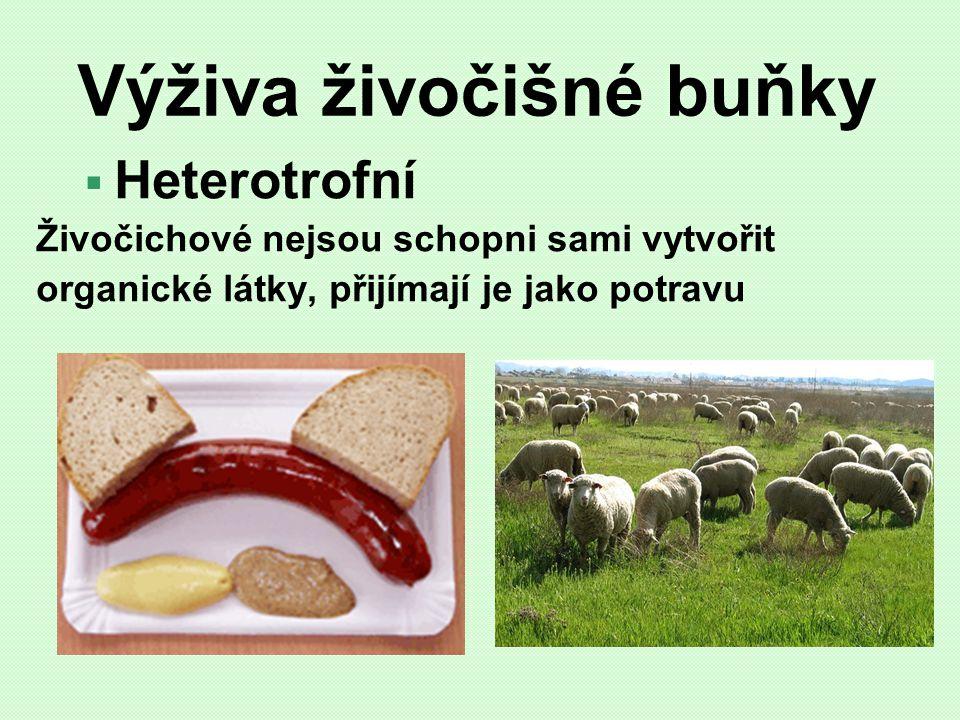 Výživa živočišné buňky  Heterotrofní Živočichové nejsou schopni sami vytvořit organické látky, přijímají je jako potravu