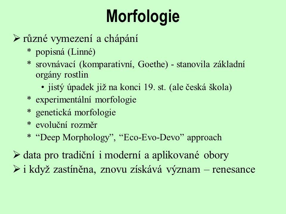 Morfologie  i když zastíněna, znovu získává význam – renesance  data pro tradiční i moderní a aplikované obory  různé vymezení a chápání *popisná (
