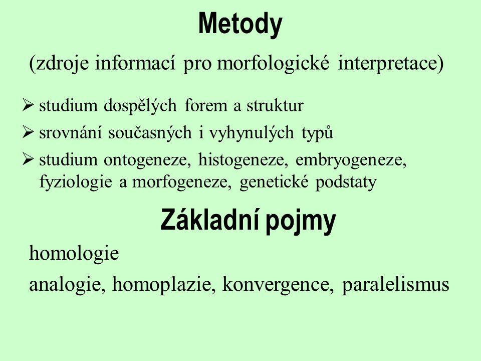 Metody (zdroje informací pro morfologické interpretace)  studium dospělých forem a struktur  srovnání současných i vyhynulých typů  studium ontogen