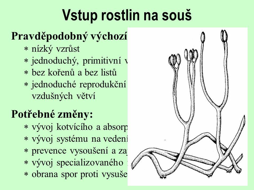 Vstup rostlin na souš Pravděpodobný výchozí stav:  nízký vzrůst  jednoduchý, primitivní vodivý systém  bez kořenů a bez listů  jednoduché reproduk