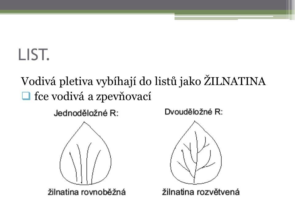 LIST. Vodivá pletiva vybíhají do listů jako ŽILNATINA  fce vodivá a zpevňovací