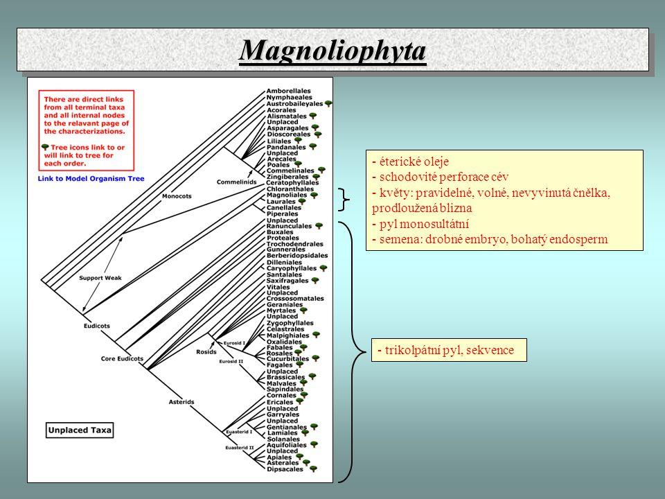 MagnoliophytaMagnoliophyta - trikolpátní pyl, sekvence - éterické oleje - schodovité perforace cév - květy: pravidelné, volné, nevyvinutá čnělka, prod