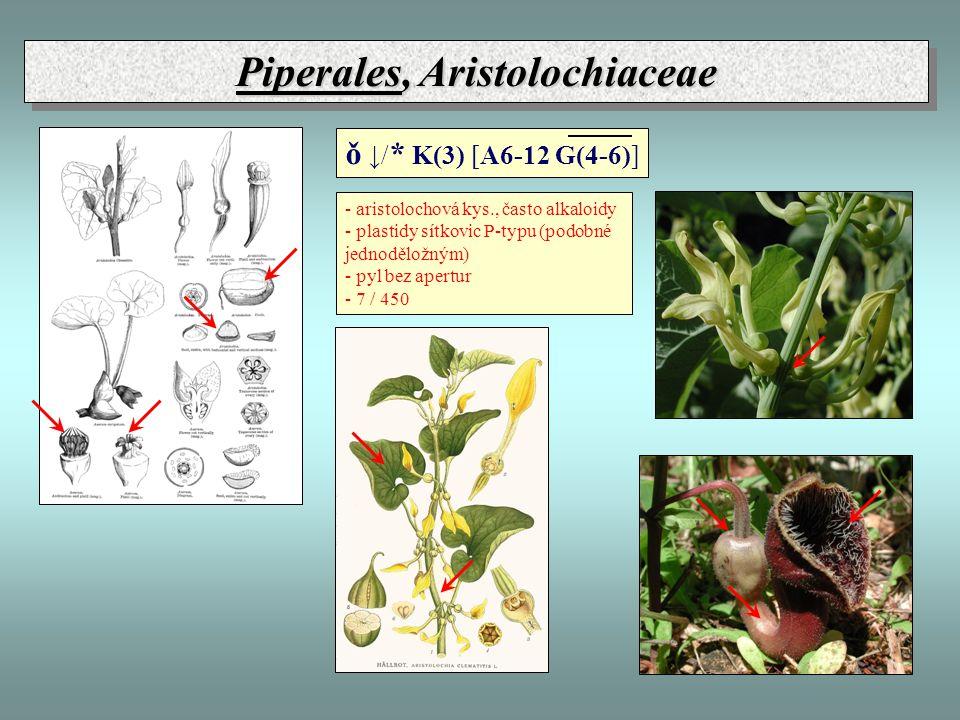 Piperales, Aristolochiaceae - aristolochová kys., často alkaloidy - plastidy sítkovic P-typu (podobné jednoděložným) - pyl bez apertur - 7 / 450 ǒ ↓/