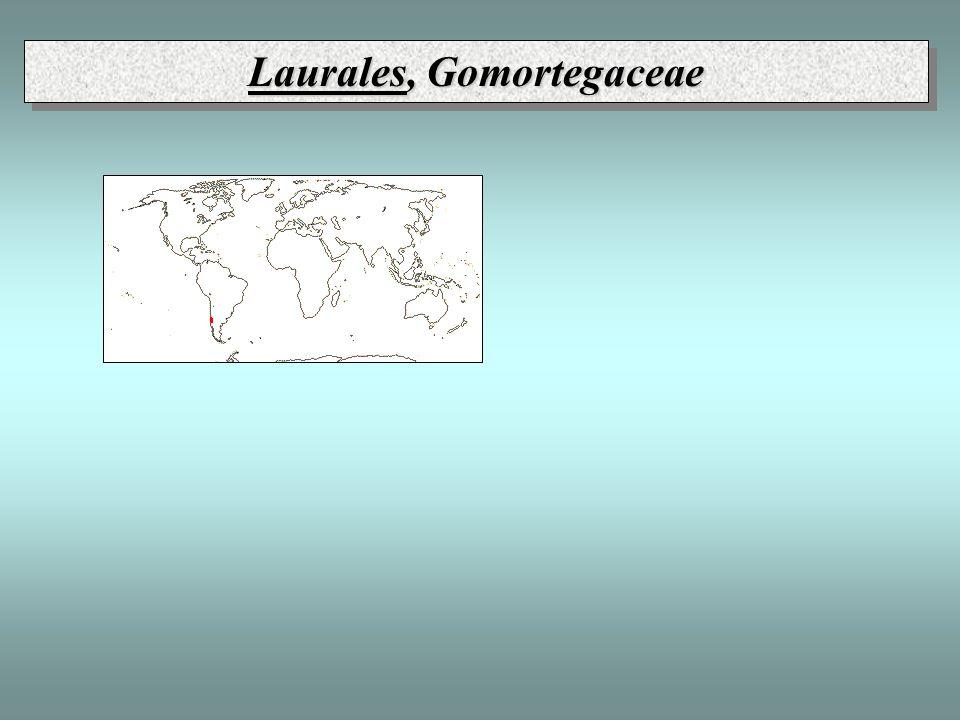 Laurales, Gomortegaceae