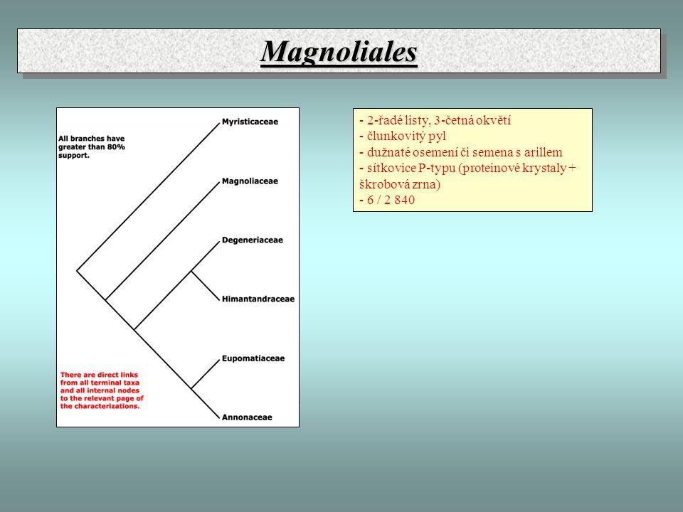 MagnolialesMagnoliales - 2-řadé listy, 3-četná okvětí - člunkovitý pyl - dužnaté osemení či semena s arillem - sítkovice P-typu (proteinové krystaly +