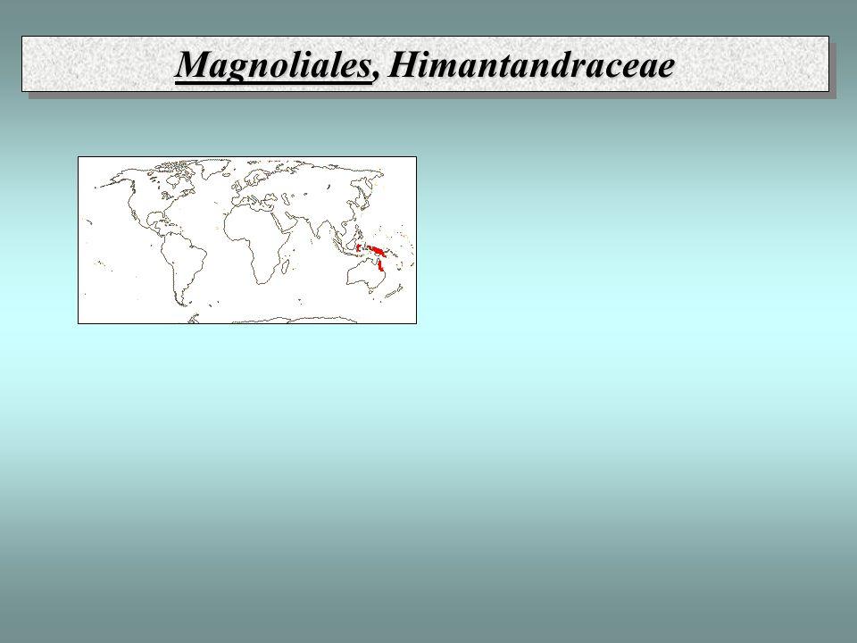 Magnoliales, Himantandraceae