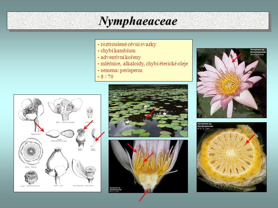 NymphaeaceaeNymphaeaceae - roztroušené cévní svazky - chybí kambium - adventivní kořeny - mléčnice, alkaloidy, chybí éterické oleje - semena: perisper