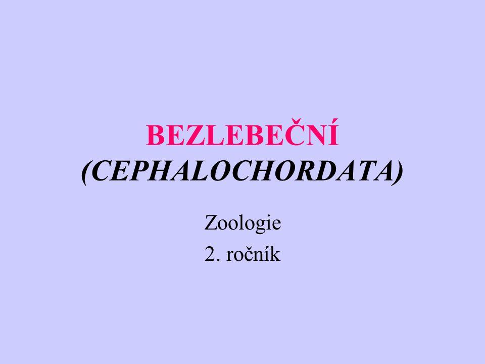 BEZLEBEČNÍ (CEPHALOCHORDATA) Zoologie 2. ročník