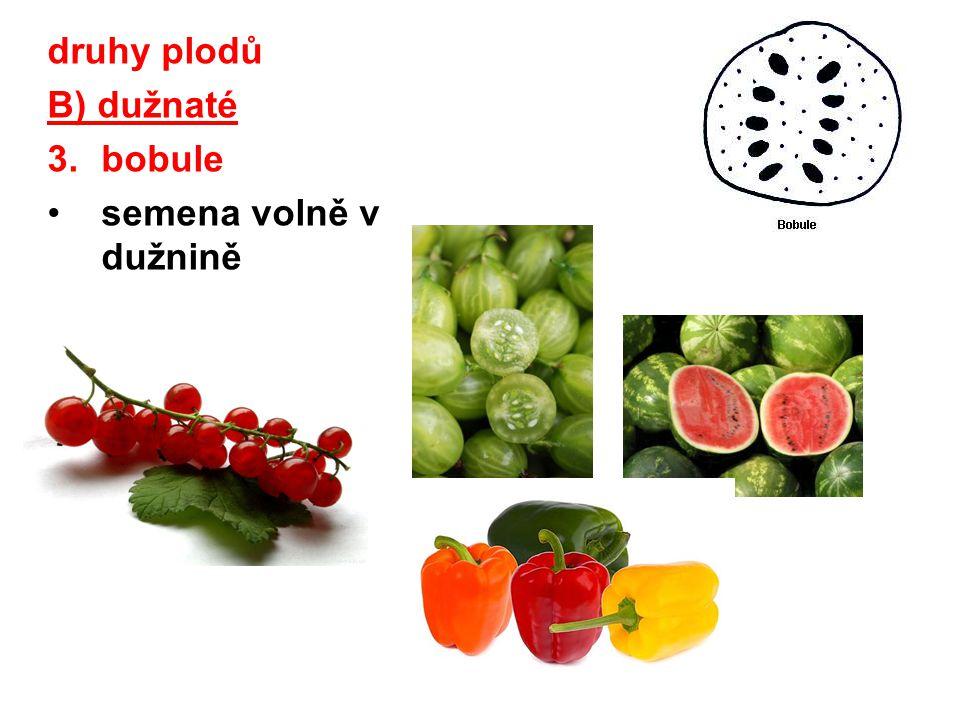 druhy plodů B) dužnaté 3.bobule semena volně v dužnině