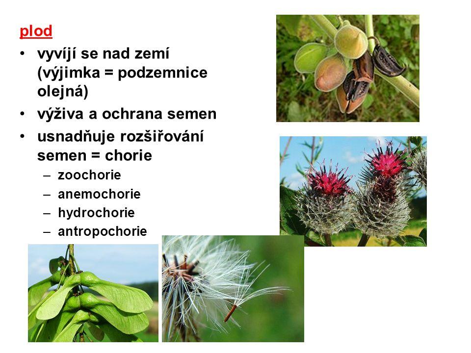 plod vyvíjí se nad zemí (výjimka = podzemnice olejná) výživa a ochrana semen usnadňuje rozšiřování semen = chorie –zoochorie –anemochorie –hydrochorie