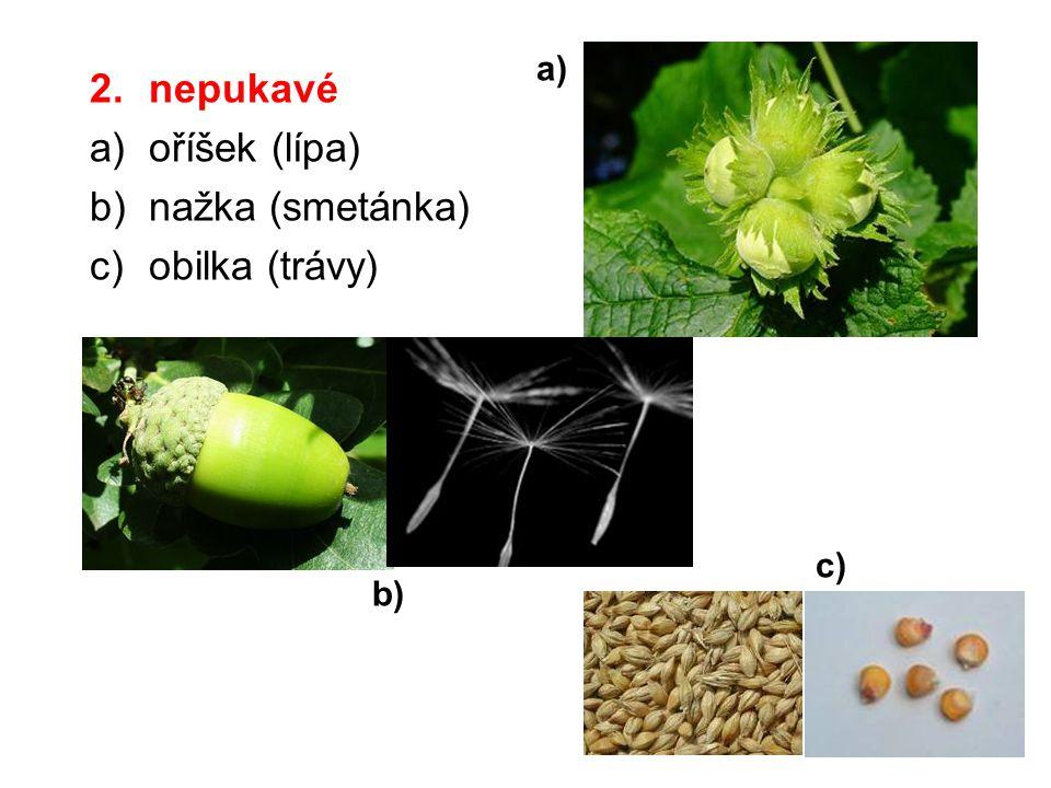 2.nepukavé a)oříšek (lípa) b)nažka (smetánka) c)obilka (trávy) a) b) c)