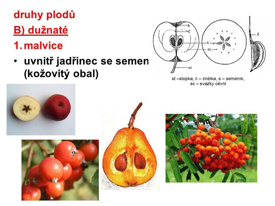 druhy plodů B) dužnaté 2.peckovice uvnitř sklerenchymatická pecka se semeny