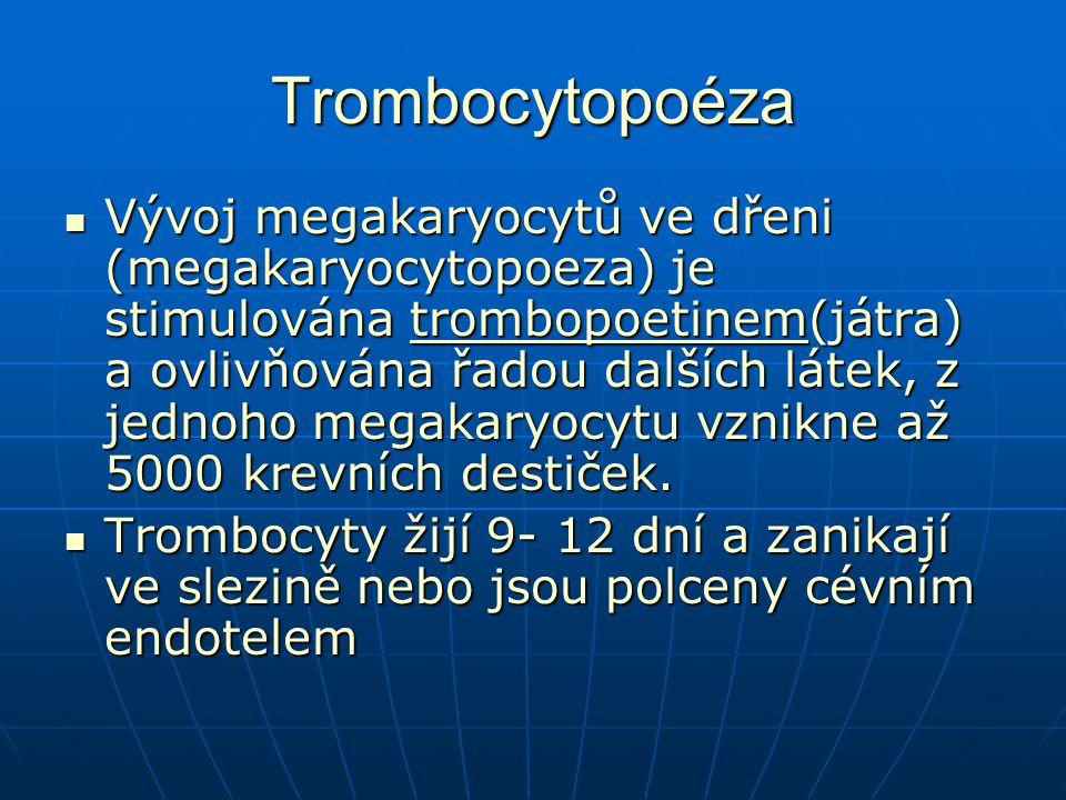 Trombocytopoéza Vývoj megakaryocytů ve dřeni (megakaryocytopoeza) je stimulována trombopoetinem(játra) a ovlivňována řadou dalších látek, z jednoho megakaryocytu vznikne až 5000 krevních destiček.