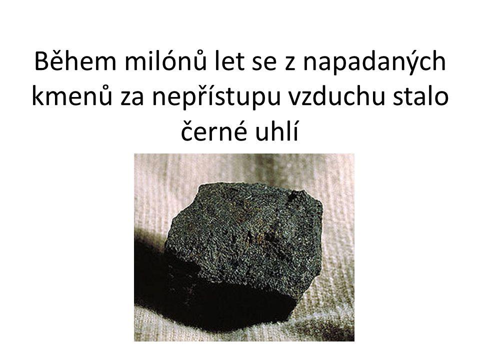 Během milónů let se z napadaných kmenů za nepřístupu vzduchu stalo černé uhlí