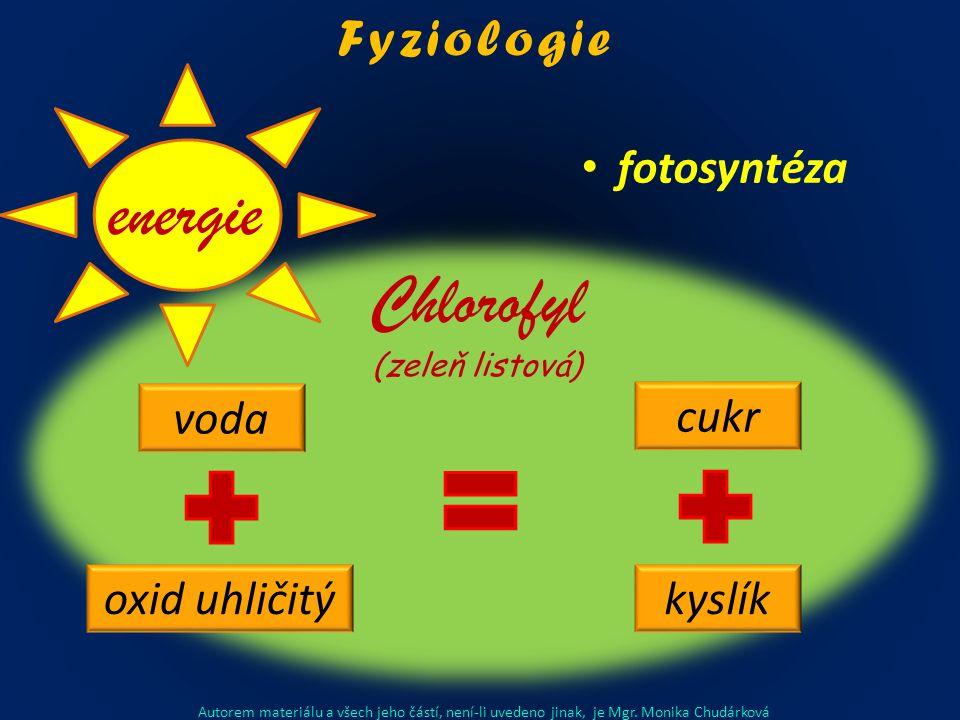 fotosyntéza voda oxid uhličitý cukr kyslík Chlorofyl (zeleň listová) energie Autorem materiálu a všech jeho částí, není-li uvedeno jinak, je Mgr.