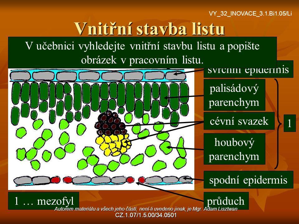 Vnitřní stavba listu kutikula svrchní epidermis palisádový parenchym houbový parenchym cévní svazek spodní epidermis průduch 1 1 … mezofyl V učebnici