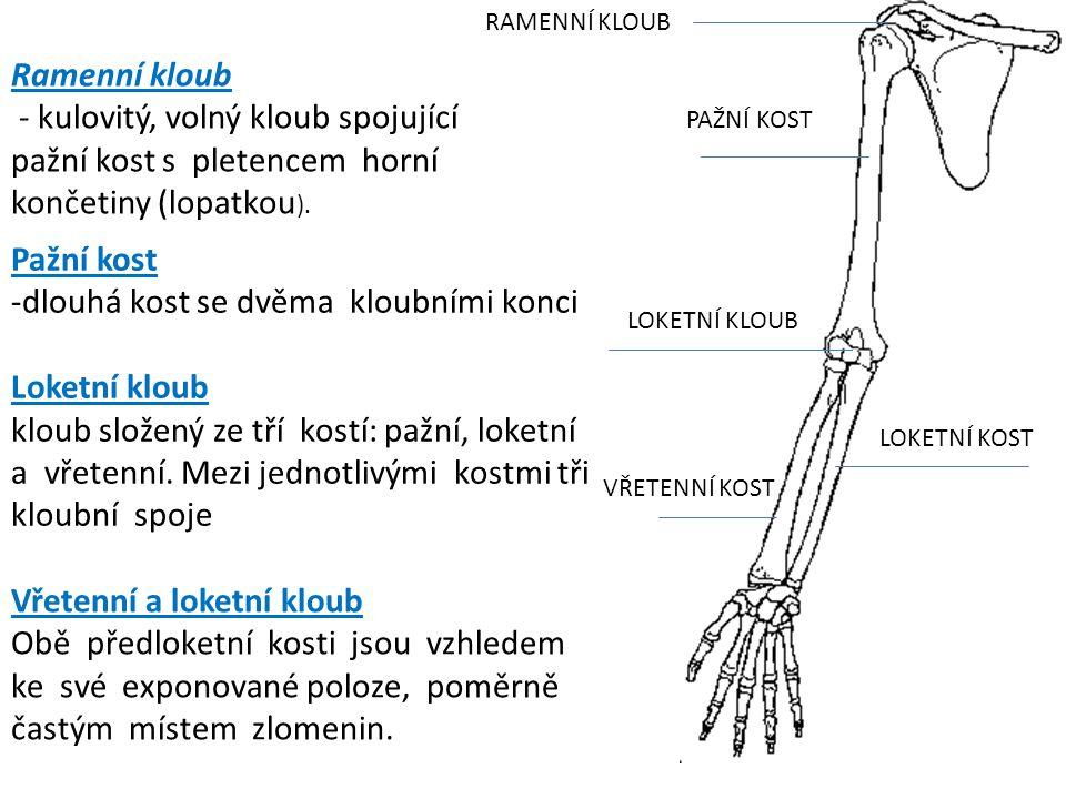 PAŽNÍ KOST VŘETENNÍ KOST LOKETNÍ KOST LOKETNÍ KLOUB RAMENNÍ KLOUB Pažní kost -dlouhá kost se dvěma kloubními konci Loketní kloub kloub složený ze tří