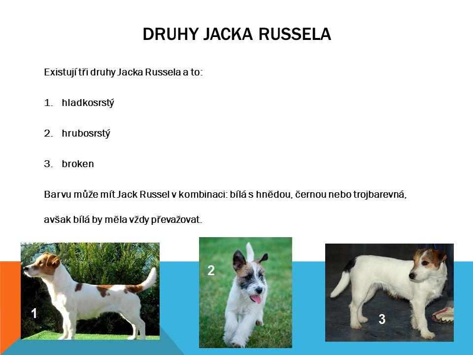 HISTORIE PLEMENE  Jack Russel byl vyšlechtěn v 19. století v Anglii reverendem Johnem Russelem  chtěl vyšlechtit psa, který by vyhovoval jeho potřeb