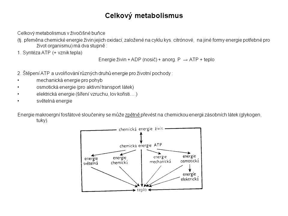 Celkový metabolismus Celkový metabolismus v živočišné buňce (tj.