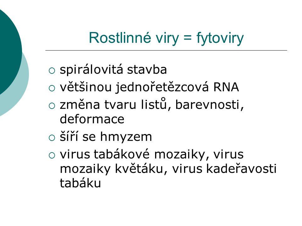Rostlinné viry = fytoviry  spirálovitá stavba  většinou jednořetězcová RNA  změna tvaru listů, barevnosti, deformace  šíří se hmyzem  virus tabák