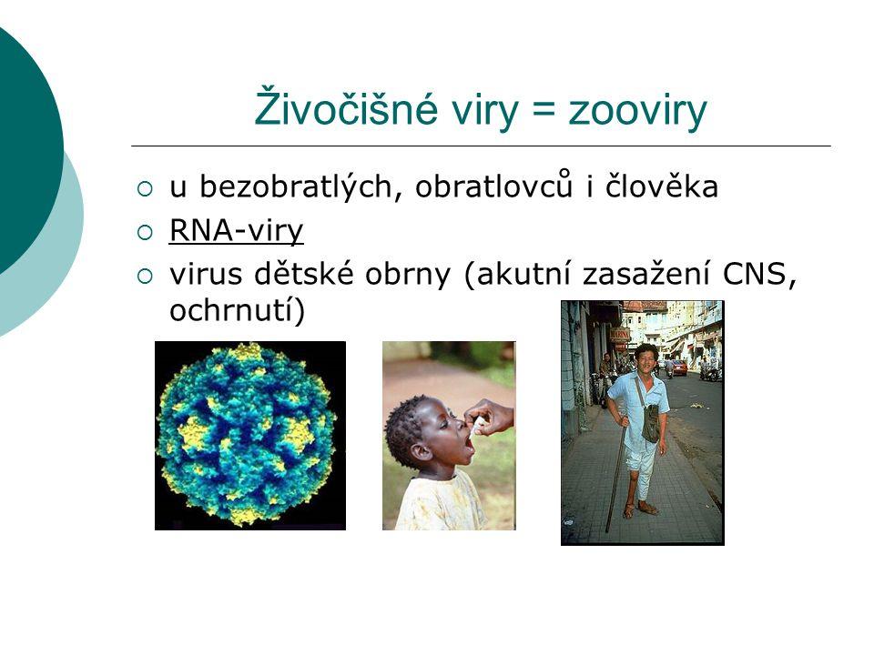Živočišné viry = zooviry  u bezobratlých, obratlovců i člověka  RNA-viry  virus dětské obrny (akutní zasažení CNS, ochrnutí)