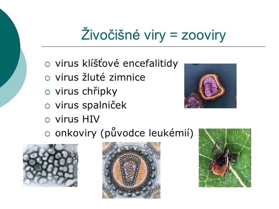 Živočišné viry = zooviry  virus klíšťové encefalitidy  virus žluté zimnice  virus chřipky  virus spalniček  virus HIV  onkoviry (původce leukémi