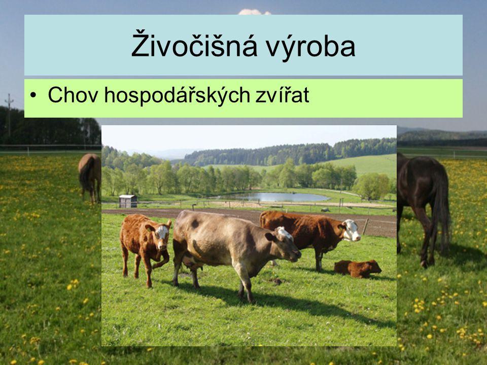 Živočišná výroba Chov hospodářských zvířat
