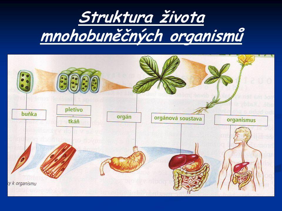 Struktura života mnohobuněčných organismů