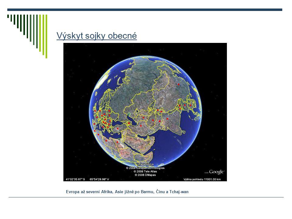 Výskyt sojky obecné Evropa až severní Afrika, Asie jižně po Barmu, Čínu a Tchaj-wan