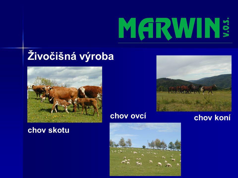 Živočišná výroba chov skotu chov koní chov ovcí