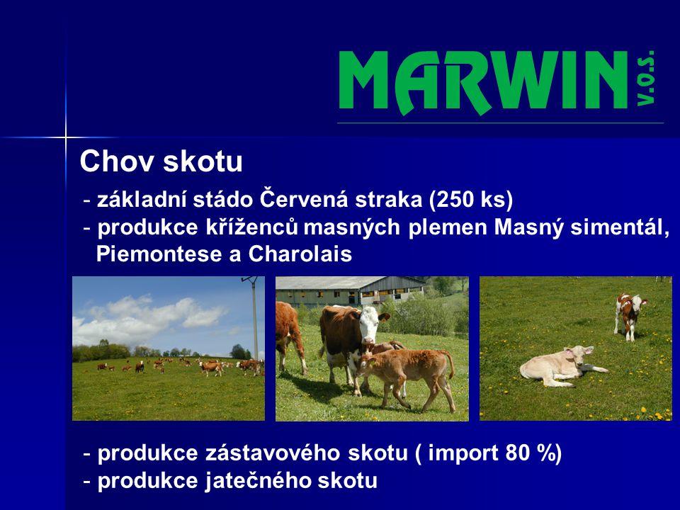 Chov skotu - základní stádo Červená straka (250 ks) - produkce kříženců masných plemen Masný simentál, Piemontese a Charolais - produkce zástavového skotu ( import 80 %) - produkce jatečného skotu