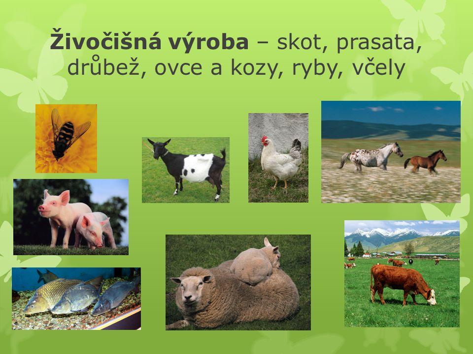 Živočišná výroba – skot, prasata, drůbež, ovce a kozy, ryby, včely