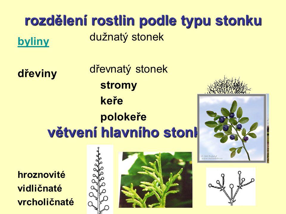 rozdělení rostlin podle typu stonku byliny dřeviny hroznovité vidličnaté vrcholičnaté dužnatý stonek dřevnatý stonek stromy keře polokeře větvení hlav