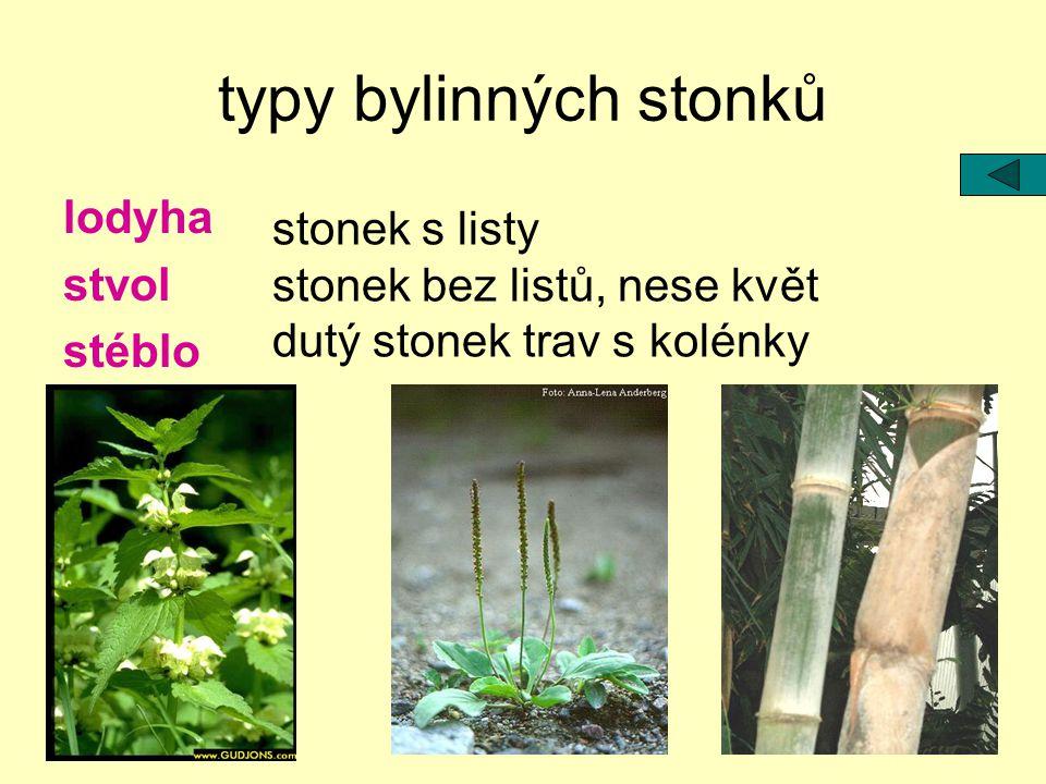 typy bylinných stonků lodyha stvol stéblo stonek s listy stonek bez listů, nese květ dutý stonek trav s kolénky