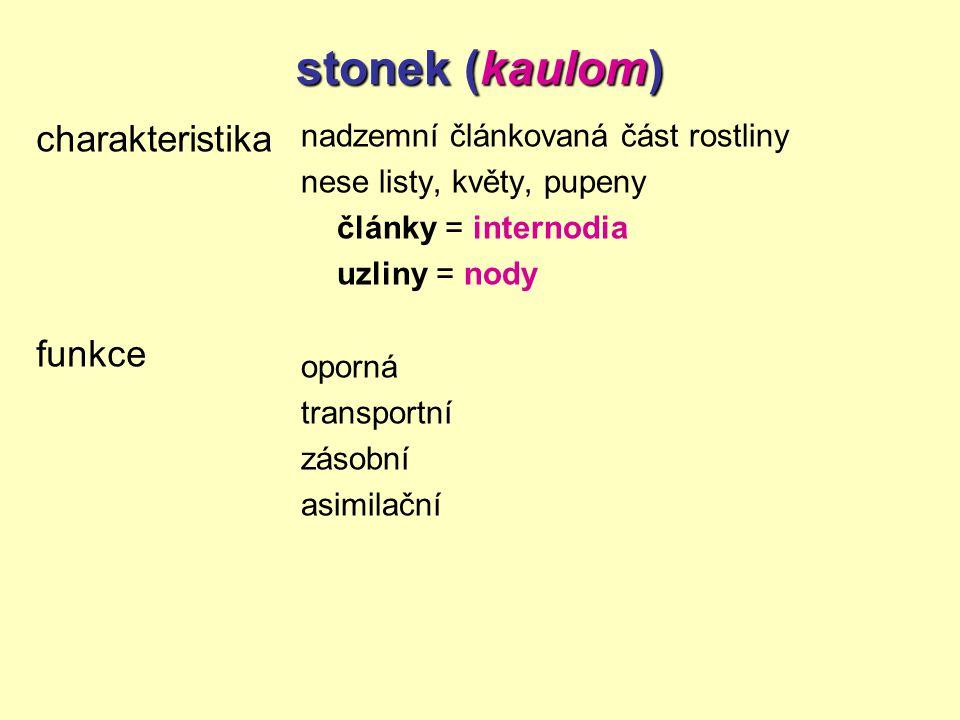 stonek (kaulom) charakteristika funkce nadzemní článkovaná část rostliny nese listy, květy, pupeny články = internodia uzliny = nody oporná transportn