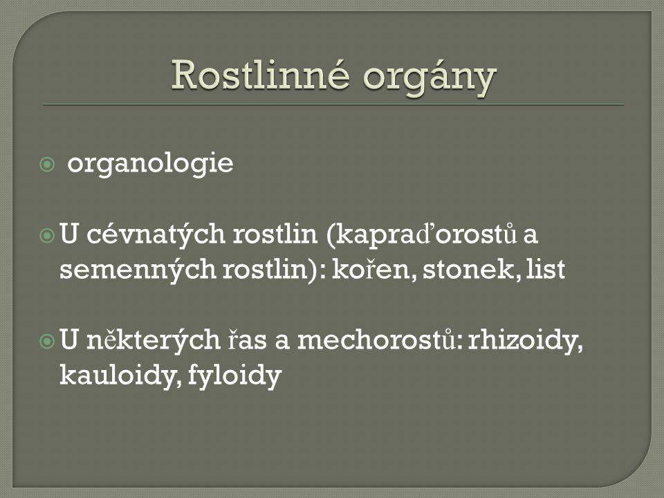  organologie  U cévnatých rostlin (kapra ď orost ů a semenných rostlin): ko ř en, stonek, list  U n ě kterých ř as a mechorost ů : rhizoidy, kauloi