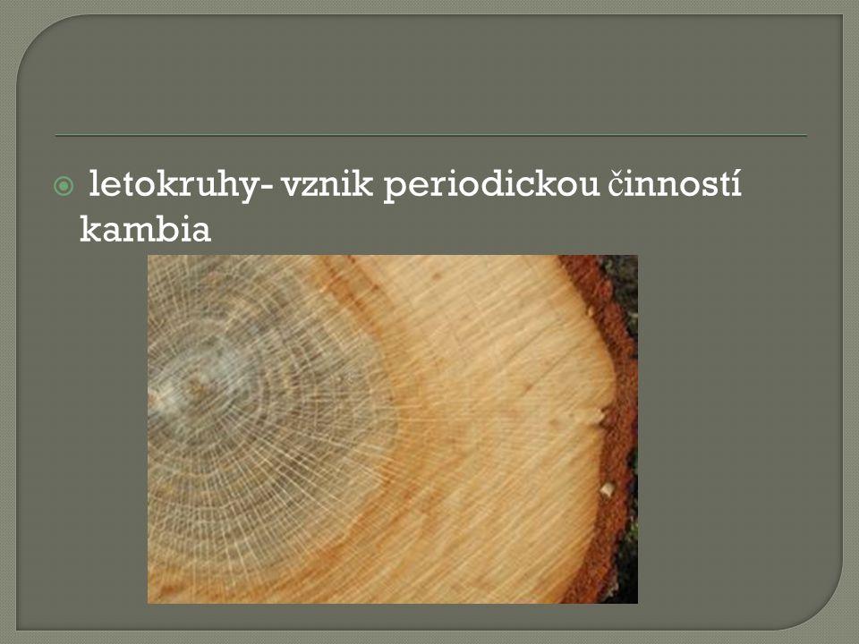 letokruhy- vznik periodickou č inností kambia
