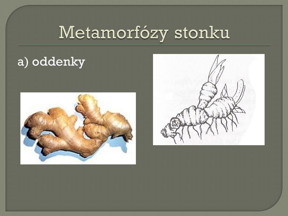 a) oddenky