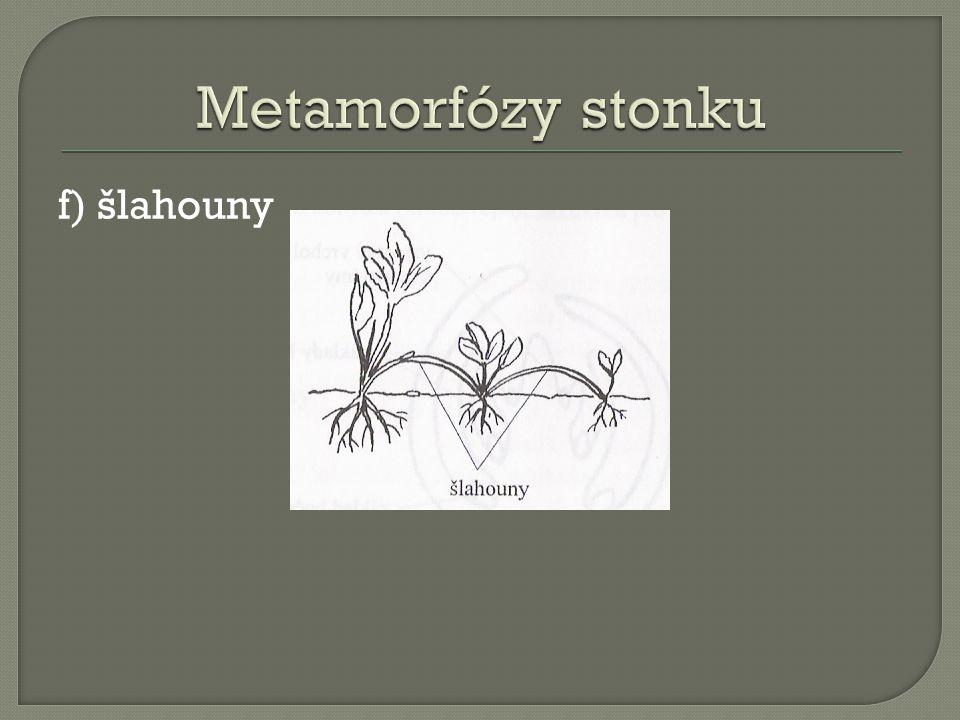 f) šlahouny